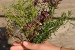 bouquet 4 herbes  (2)_01