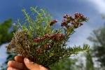bouquet 4 herbes  (4)_01