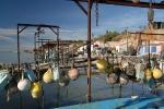huitre-de-bouzigues-10