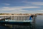 huitre-de-bouzigues-20