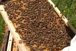 interieur de ruche 1 01