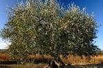 4-saisons-automne