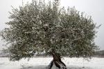 4-saisons-hiver