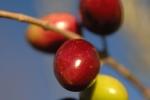automne-2010-4