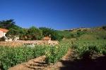 vins-de-banyuls-2-w