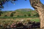 vins-de-banyuls-4-w