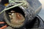 peche au poulpe au pot  (1)