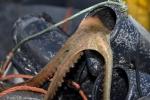 peche au poulpe au pot  (3)