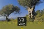 aoc-olive-de-nimes-1-web