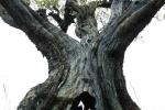 bois-d-olivier-10