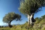bois-d-olivier-11