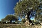 bois-d-olivier-12