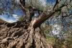 bois-d-olivier-3