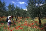 olivettes-1