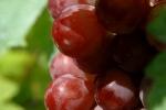 raisin-noir-3
