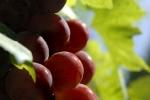 raisins-noirs-2