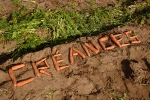 carotte-de-creance-4