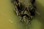caiman-noir