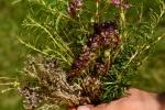 bouquet 4 herbes  (1)_01
