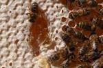 interieur de ruche 10 01