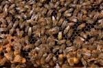interieur de ruche 4 01