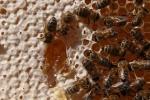 interieur de ruche 8 01