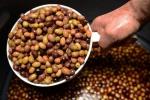 olives en saumure  (2)_01