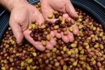 olives en saumure  (6)_01
