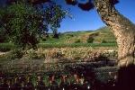 vins-de-banyuls-1-w