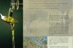 aoc-olive-de-nimes-2-web