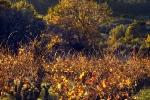 automne-aujargues-0067